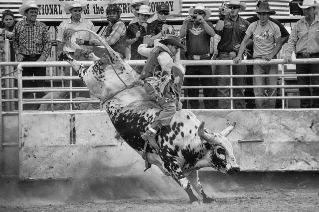 Bull Rider - By Sam Meddis