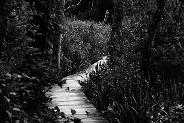 Marsh Path - By Sam Meddis