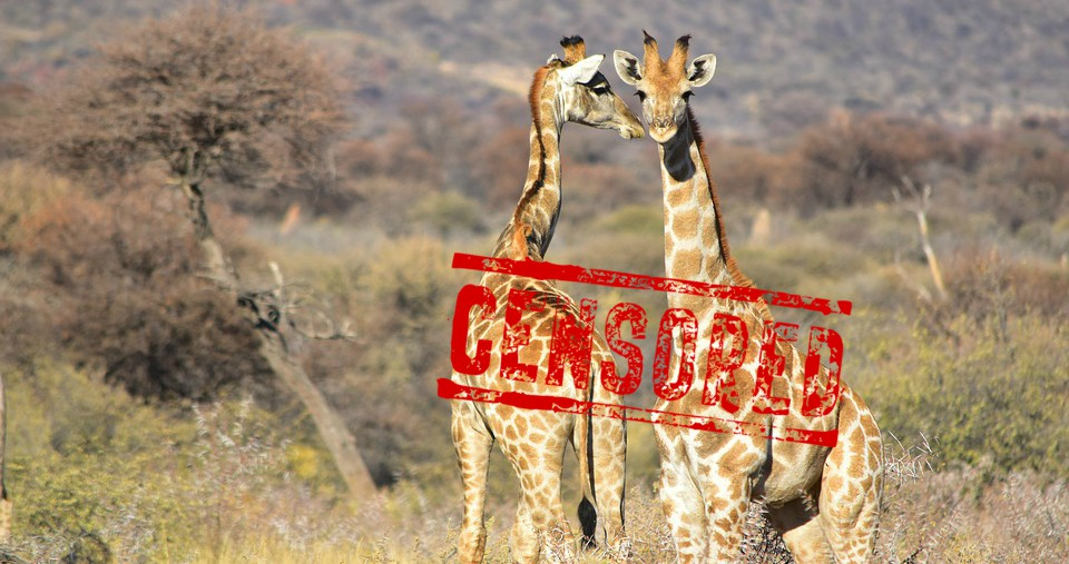The Internet Is Smitten With Giraffe Labor and Delivery Live Feed – NSFW?