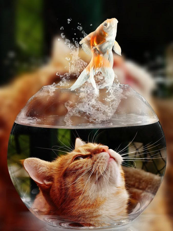 Goldfish carnival prizes