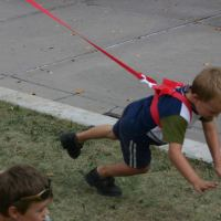 Leashed Toddler Can Jump up, Roll Over