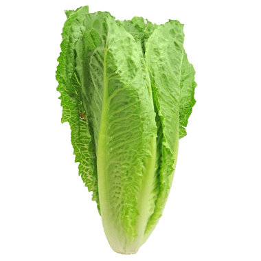 The CDC has issued a warning to stay away from romaine lettuce.