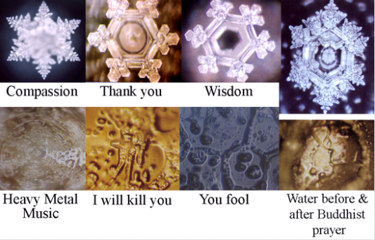 Dr Masaru Emoto water experiments Sammiches and Psych Meds IKEA bullying plants