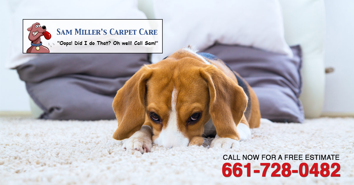 miller carpet care  Floor Matttroy