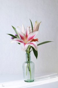 Flowers in vases | Sammy Photo