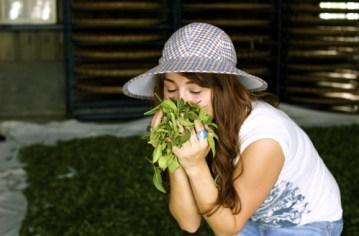 Jodet Breathing in the Fragrant Tea Leaf