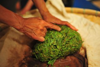 Inspecting The Goods: Oolong Getting Rolled & Withered