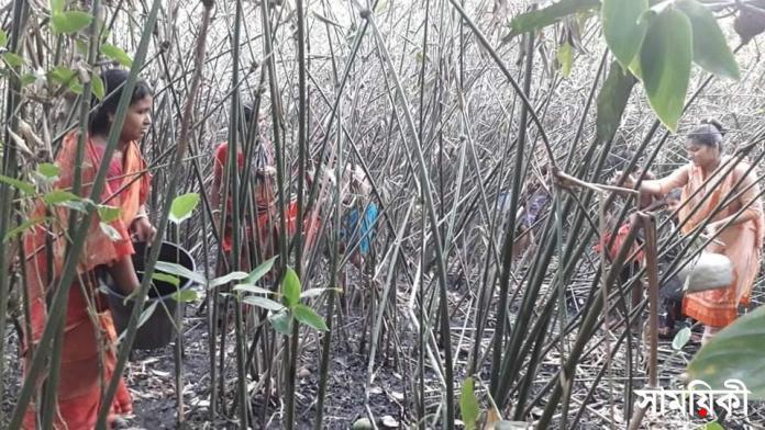 bgb শীতল পাটির কাঁচামাল 'পাইত্রা' বাগানে আগুন: <br>ঝালকাঠীর নলছিটির ৫০ পাটিকর পরিবার অসহায়