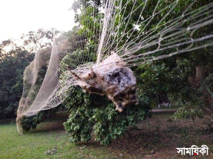 2 2 নাটোর উত্তরা গণভবন: <br>কারেন্ট জাল বিছিয়ে বিলুপ্ত প্রজাতির প্রাণী নিধন