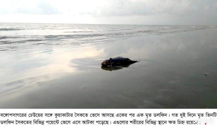 kalapara pic3 dolphin recovery 10 05 2021 সাগরের ঢেউয়ে ভেসে আসছে একাধিক মৃত ডলফিন