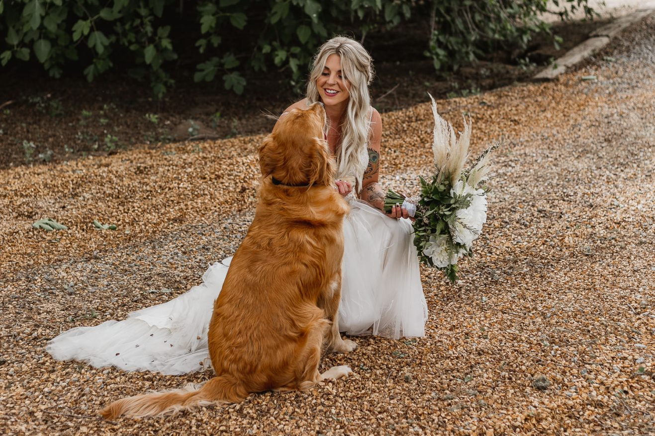 Bride with golden retriever.