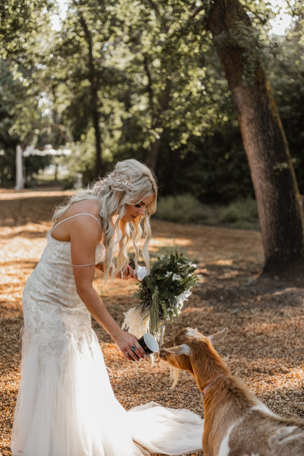 A Snow White bride petting goats on the horse ranch.