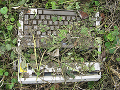 Typewriter Covered with Vegetation