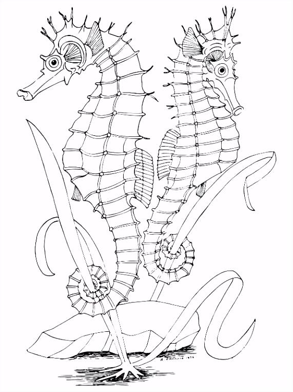 Kleurplaten Zeepaardje