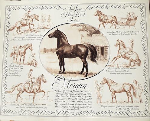Morgan Horse in Portrait & Action
