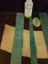 Bleach-Stained Carpet Brings Sams to the Rescue!  Sams ...