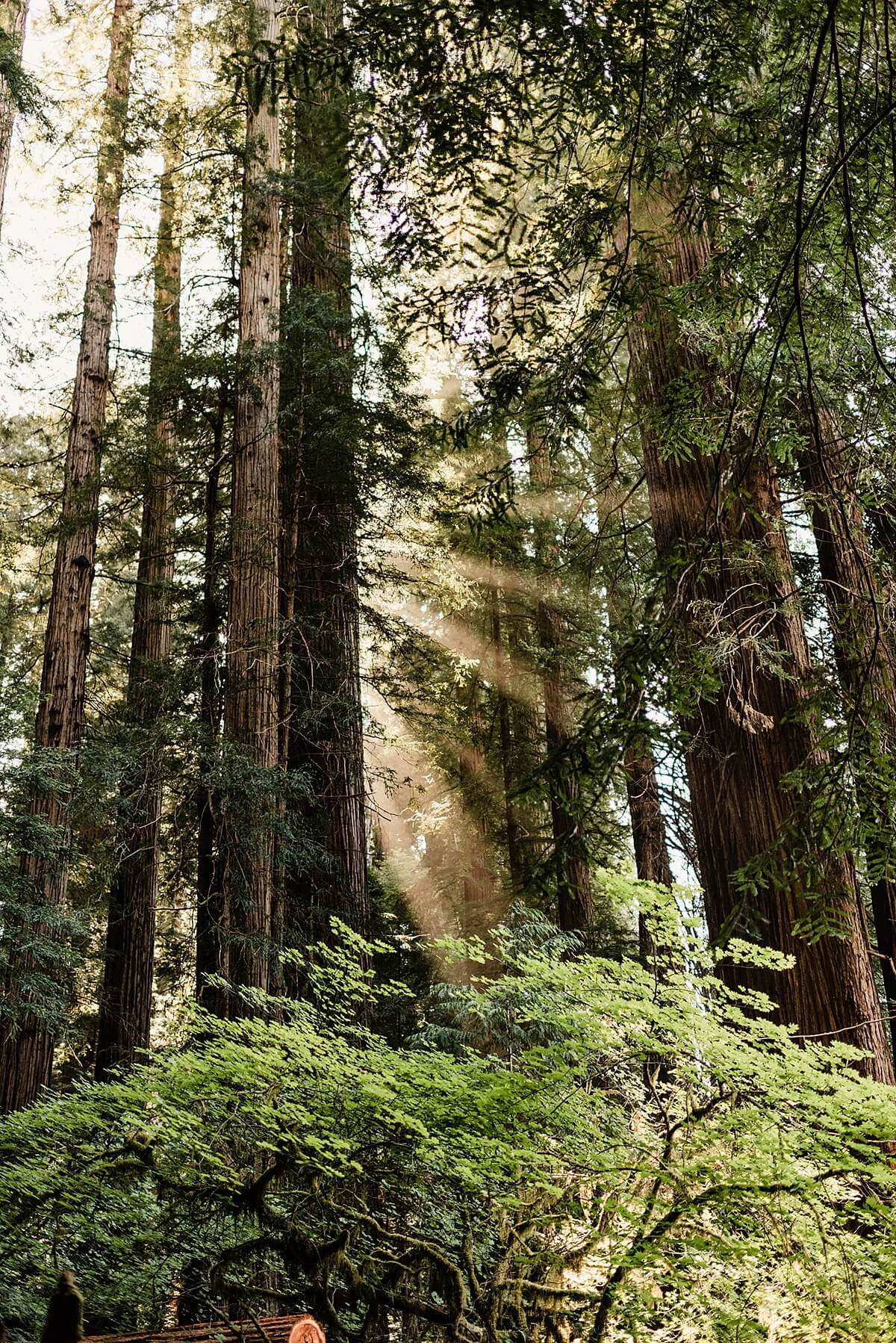 Allison-Brooks-Jedediah-Smiith-Redwoods-Adventure-Elopement-Wedding-S-Photography-Blog_0043.jpg