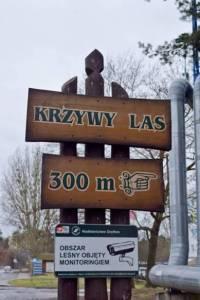 Polonya'nın Batı Pomerania bölgesinde, Krzywy Las (Eğri Orman) beldesinde 400 eğik ağa var.