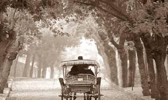 Türk Edebiyatı'nda Modernizm: Araba Sevdası'nda Kimlik Bunalımı