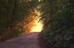 La naturopathie, un art de vie