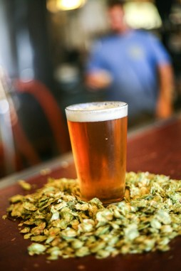 A glass of beer brewed at Pizza Port San Clemente sits among some Amarillo hops the brewery uses in some of their beers.