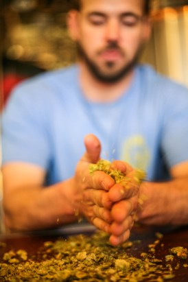 Trevor Walls, head brewer of Pizza Port San Clemente, demonstrates the aroma released by hops when it's boiled to make beer by heating it with his hands.