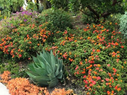 An example of a drought tolerant garden. Photo by Freda D'Souza