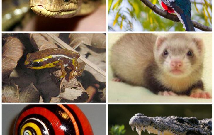 5 animales endémicos de Cuba que tienes que conocer