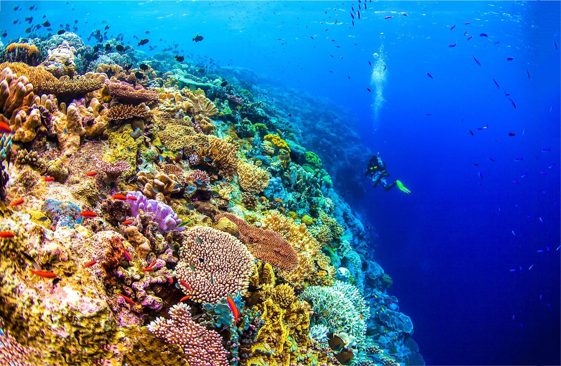 the 10 best snorkeling