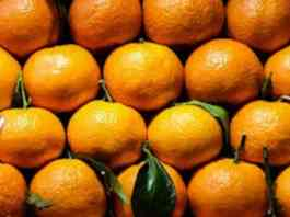 citrus fruits hindi