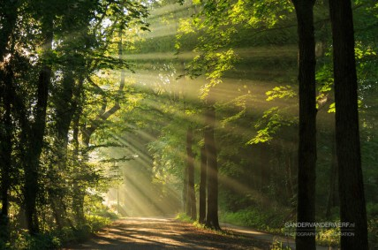 Sun rays shining through the trees on an empty lane in the forrest.