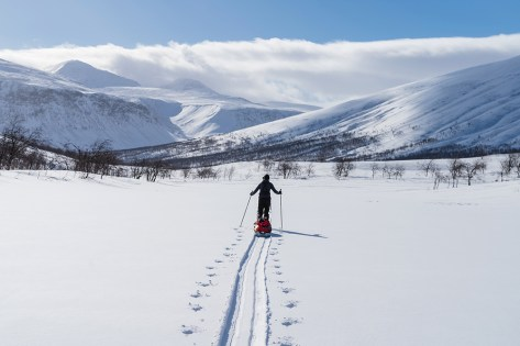 X-country skier with sled (pulka) in national park Sarek.