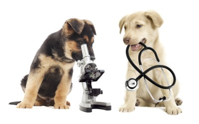 How Wellness Exams Play Critical Parts in Your Pet's Well-Being