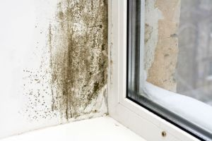 mold problem San Diego CA