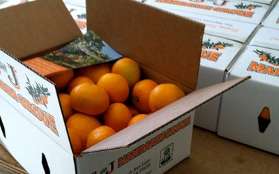 How Long Will My Mandarin Oranges Stay Fresh?