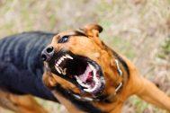 vicious dog - Minot Dog Bite Injury Attorneys - Sand Law PLLC - North Dakota