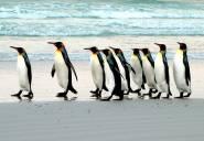 pinguinos-01