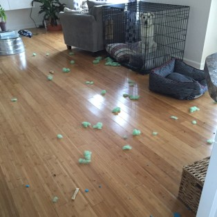 exploded dog toy