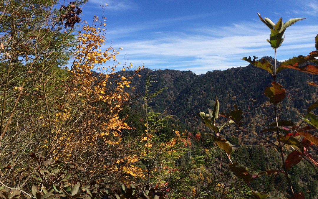 Mt. LeConte, TN