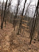 Coon Tree Trail