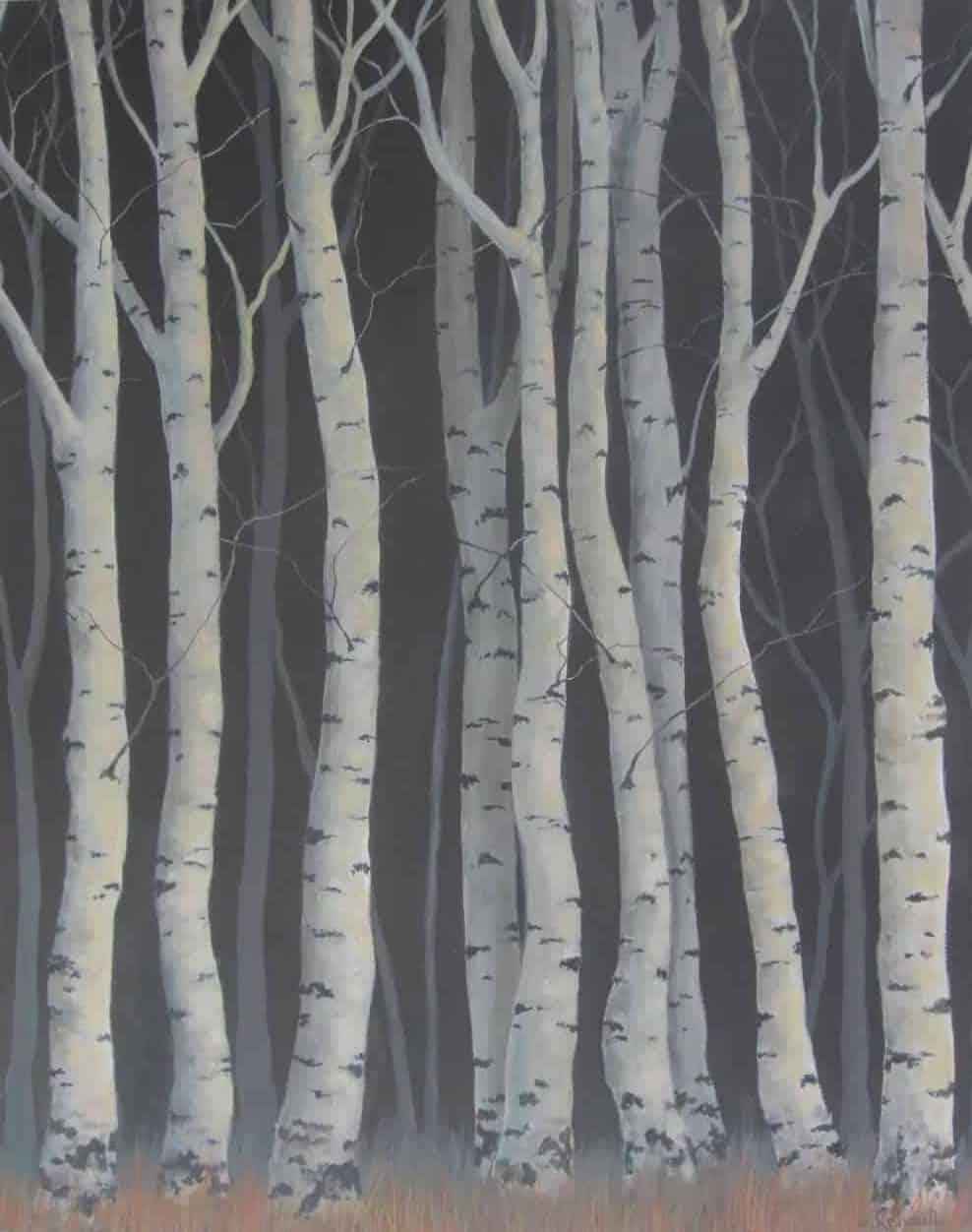 Silver birches Image