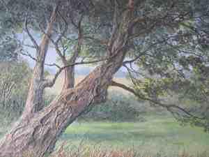 Craggy Tree, Dartmoor Image