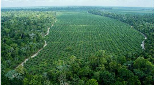 Florestas para movimentar a economia 1