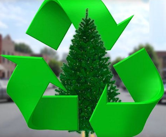 Christmas-Tree-Recycling-7