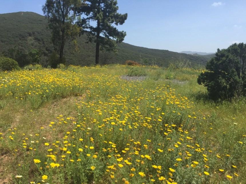 Spring in San Elijo Hills