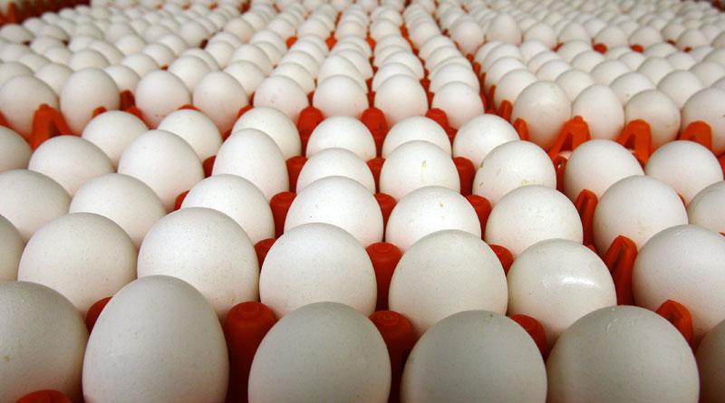 egg-price