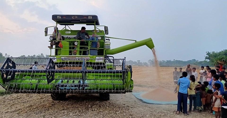 रौतहटेली किसान गहुँबाली काटन गरे कम्पाउण्डको प्रयोग