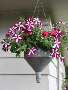 imbuti appesi, fioriere di riciclo fiori,vasi,shabby,arredo shabby,giardinaggio,tazze,catino,imbuto appeso