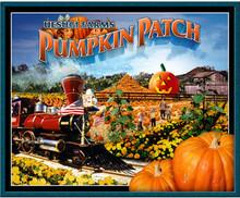 Uesugi Farms Pumpkin Patch  Morgan Hill CA at Uesugi