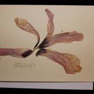 Blumenkarte Nr 4